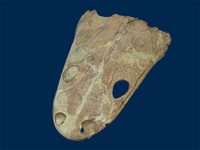 Metoposauridae