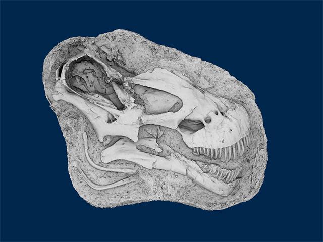 Tapuiasaurus