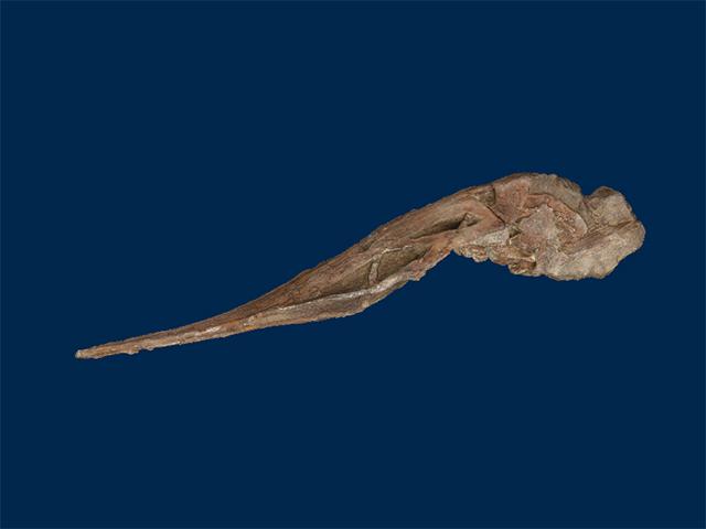 Polyodontidae