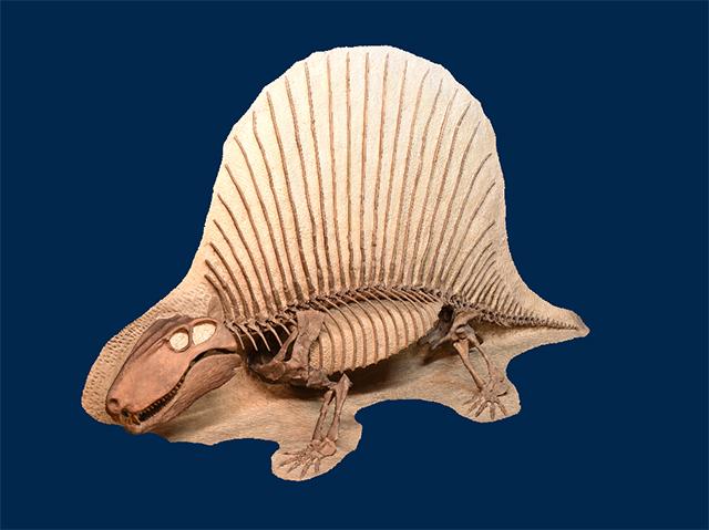 Sphenacodontidae
