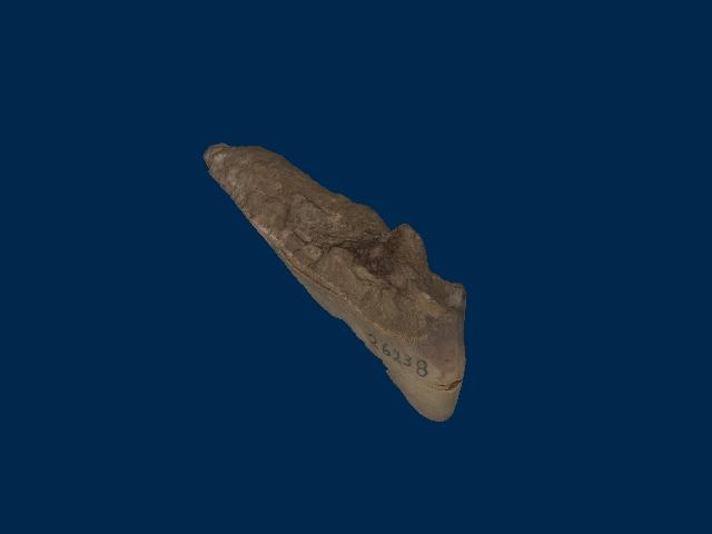 Ptyctodontidae