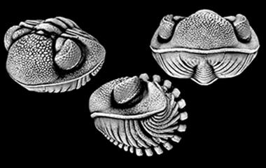 3D Invertebrates