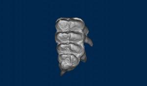 Mastodon right M3 (upper third molar)