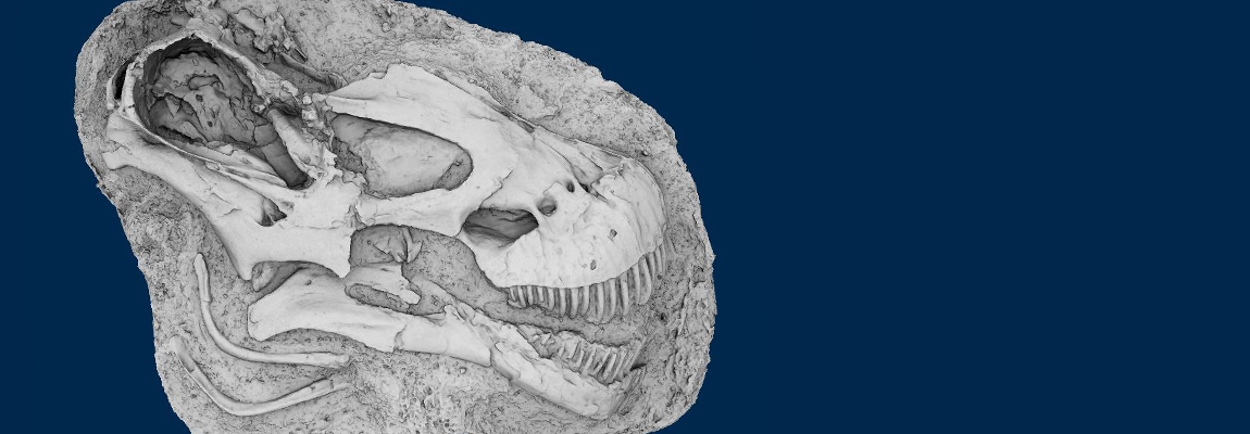 <em>Tapuiasaurus macedoi</em>