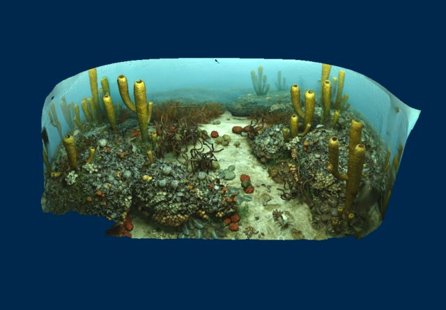 Permian Ocean